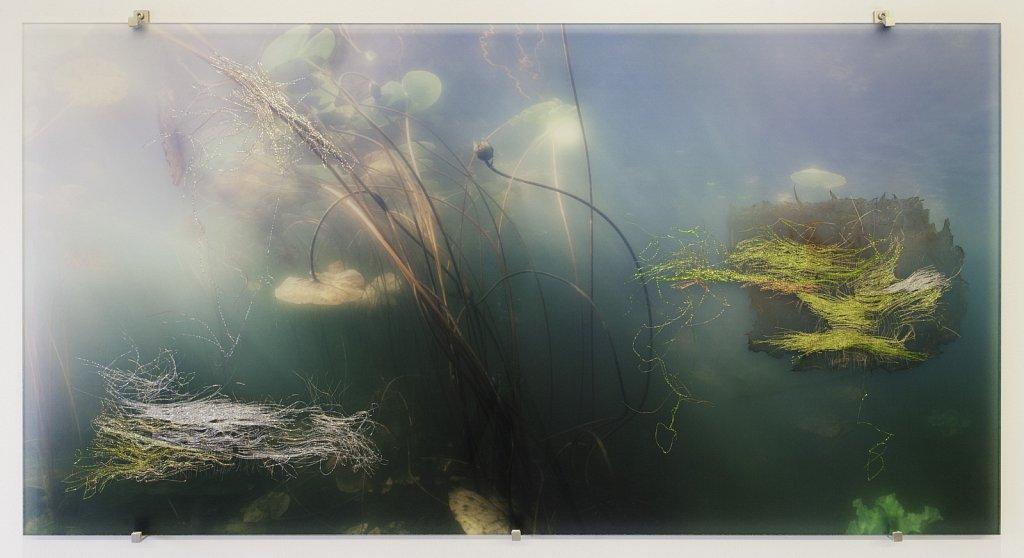 Vattenträdgård I.